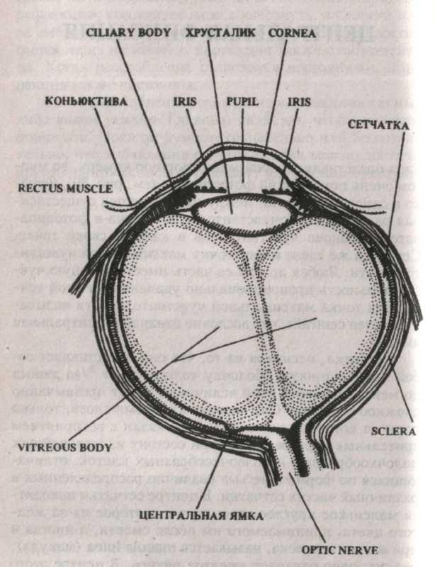 Клиника федорова в москве отзывы о лазерной коррекции зрения
